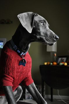 Red Sweater - dapper.