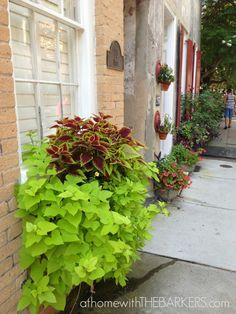 Sweet potato vine and coleus great idea Charleston Walking Tour Window Boxes over flowing! Outdoor Plants, Outdoor Gardens, Outdoor Decor, Outdoor Spaces, Container Plants, Container Gardening, Flower Containers, Charleston Tours, Lawn And Garden