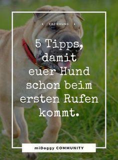 || #Hund || Ideen || #Hunde || Tipps || Tricks || Ideen || Liebe || Welpen || Bilder || #Erziehung