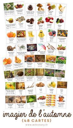 Article récapitulatif pour l'automne : activités, jeux, livres, imagier et cartes de nomenclature, DIY, & pleins de documents à télécharger gratuitement !