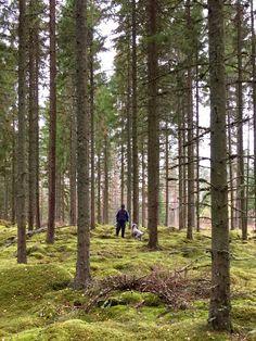 Sweden Woods ..