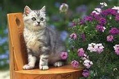 Kitten Surrounded By Flowers - Yahoo Image Search Results