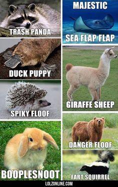 Alternative Names We Should Use#funny #lol #lolzonline