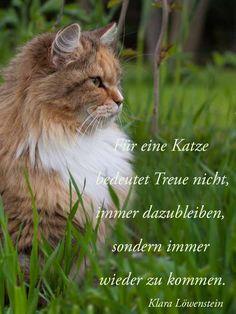 Über die Treue von Katzen