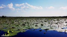 Delta Dunarii Golf Courses, Mountains, Nature, Travel, Naturaleza, Viajes, Trips, Nature Illustration, Outdoors