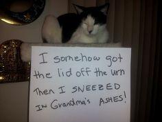 I sneezed in grandma's ashes.
