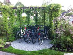 Här är vår pergola som vi använder till cyklarna. Vi byggde denna för ett antal är sedan men det är först nu har vildvin och buxbom vuxit till sig ordentligt.