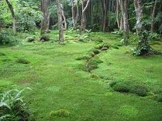 Nur ganz wenige Pflanzenarten schaffen diese ruhige und malerische Bildwirkung.