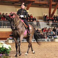 Gala d'ouverture 2014 #Cadrenoir #Saumur #chevalannonce