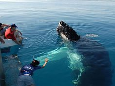 Enjoy Blue whale watching tours in mirissa while you visiting sri lanka. There are believed to be around 26 different species of whales traversing this region and this includes the well loved dolphin.
