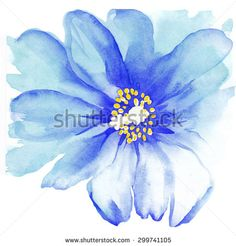 watercolor blue anemone - Google-søgning