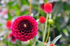 Here are 10 flowering plants that look gorgeous and reward you with seeds.