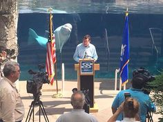 Yesterday during a press conference at Mystic Aquarium and Sea Research Center, Juno the Beluga Whale decided he needed some attention and proceeded to photobomb President and CEO Stephan Coan, as well as Gov. Dan Malloy, the entire length of the press-conference. Apparently Juno doesn't take kindly to being ignored by government officials.