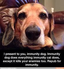 Immunity dog!