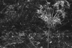 Life. #boscodifesagrande #gravina #gravinainpuglia #gravinainphoto #natura #nature #blackandwhite #blackandwhitephoto #naturephotography #naturelovers #life #flowers #flowerstagram #puglia #distruction #instamood #instadaily