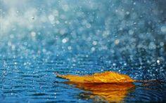 De mi cosecha: Una lluvia de verano