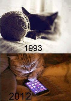 ネコの世界も進歩してます、、、