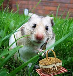 Hamster Picnic:)