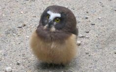 Daily Cute: Boulder County Police Meets a Baby Owl