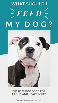 Tidy transmitted dog health and food Curious? Read on Cute Dogs Breeds, Dog Breeds, Best Dog Food, Best Dogs, Big Dog House, Dog Care Tips, Pet Care, Military Dogs, Working Dogs