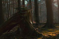 Fotograf Guardians of the Forest von Laurin Keul auf 500px