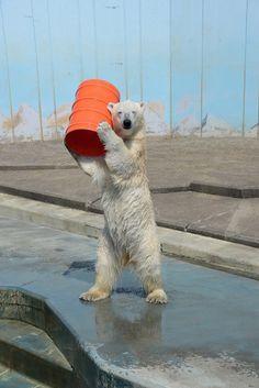 中に人が入っている疑惑?釧路市動物園のおちゃめなしろくま、「ミルク」の写真集発売! ローカルニュース!(最新コネタ新聞)北海道 釧路市 「colocal コロカル」ローカルを学ぶ・暮らす・旅する
