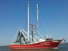 Rare Goblin Shark Snagged By Fisherman Off Florida Waters - NBC News
