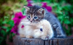 Download wallpapers small gray kitten, brown fluffy rabbit, friendship concepts, cute animals, cat and rabbit