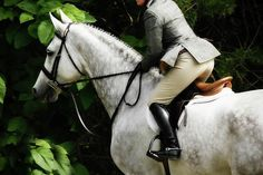 Horses - Love the jumping hunters