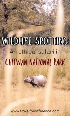 Chitwan National Park is the first national park of Nepal, and is home to the bengal tigers, the one-horned rhinos, sloth bears and so much more! Today let's talk about spotting wildlife in this park on an ethical safari, along with an abundance of too. Wildlife Park, Wildlife Safari, Elephant Ride, The Sun Also Rises, Backpacking Asia, Asia Travel, Travel List, Travel Guides, Responsible Travel