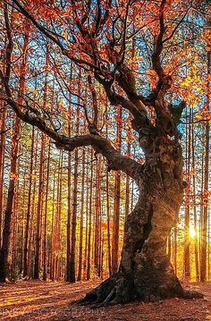 ♂ Amazing nature Sunset golden forest