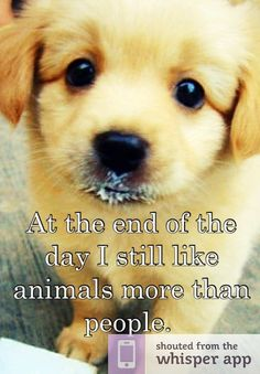 At the end of the day I still like animals more than people.