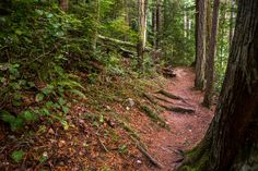 The PNT follows trails through the Anecortes Community Forest Lands, an awesome day hike!