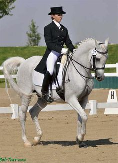 Arabian dressage horse a record breaker - Features, Focus - Horsetalk.co.nz