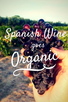 What do cow horns, lunar calendars and sheep have to do with wine? In Spain's booming organic wine movement, a lot!