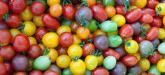 http://www.7dach.ru/Eleko/pomidory-cherri---vishenki-tomata-72777.html?utm_source=vk_7dach&utm_campaign=actual&utm_medium=social  Помидоры черри - вишенки томата  Томаты черри (cherry – с английского языка переводится как «вишня») пришли в наши огороды сравнительно недавно. Считается, что эта разновидность (Solanum Lycopersicum var Cerasiforme) родом из Чили или северного Перу и начала культивироваться в начале 19 века в декоративных целях. В 1820 году была открыта эра поедания черри, когда…