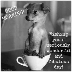 good morning good looking