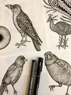 Birds drawing... Work in progress !