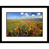 Found it at Wayfair - Landscapes Carrizo Plain National Monument California Framed Photographic Print