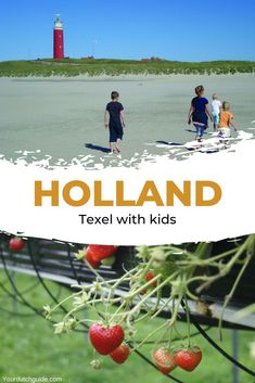 Texel with kids. Travel to The Netherlands with kids and visit Texel. Go and see seals at Ecomare, eat fresh ice creams and spends days at the beach. Travel With Kids, Family Travel, Beautiful Islands, Beautiful Places, Netherlands, Dutch, Things To Do, Children, Fun
