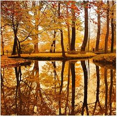 20 Beautiful Fall Pictures  <3 !