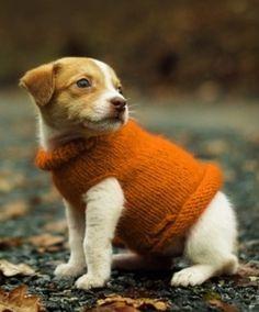 Cute baby dog