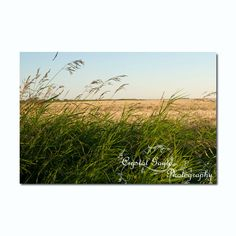 Country Chic Decor Print Rustic Wheat Field Wild Grass Grass Green Golden Yellow Sky Blue Magnetic Calendar http://ift.tt/JkjtXZ