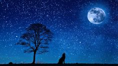 Dog-Tree-Moon-Yelp-Night-Starry-Sky-Wolf-647528-900x505.jpg (900×505)
