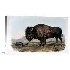 Global Gallery American Bison or Buffalo Wall Art - GCS-276579-22-142