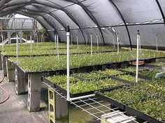 Buy Live Orchids from Hawaii - Kalapana Tropicals Wholesale & Retail Hydroponic Lettuce, Hydroponics, Orchid Nursery, Garden Center Displays, Growing Orchids, Garden Nursery, Greenhouse Gardening, Big Island, Interior Architecture