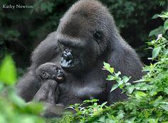Asha and her baby Mona @ the Cincinnati Zoo & Botanical Garden