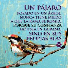 #Frases #Confianza #Dios #Fe #Creación #Amor