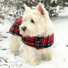 LAST CHANCE to save money!  Click the link in my bio @westiemoments to see the SALE CODE! Only this weekend! International delivery . Photo by: @roxywestie #westiemoments