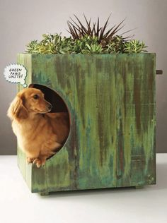 DIY Green Roof For a Dog House. hmm maybe a good idea to use something my cat can chew on.